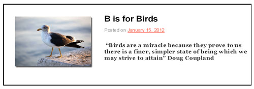 B is for Birds