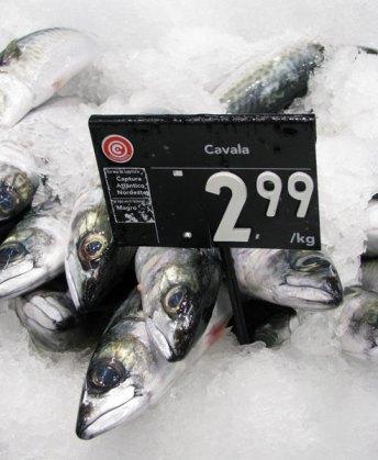 Cavala fish