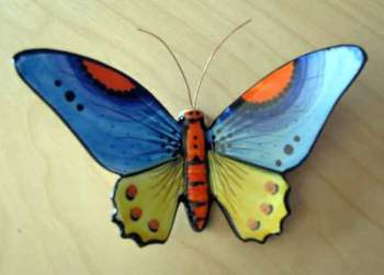 Monchique butterfly