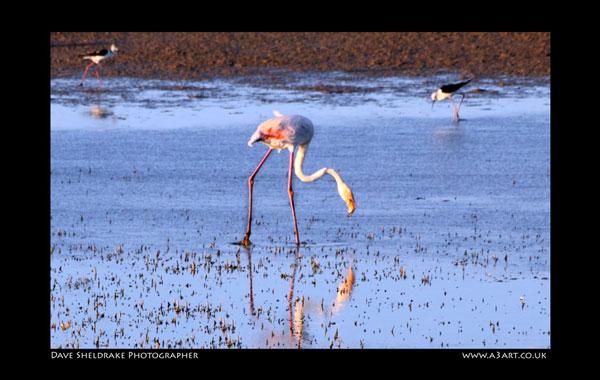 Salgados bird 1