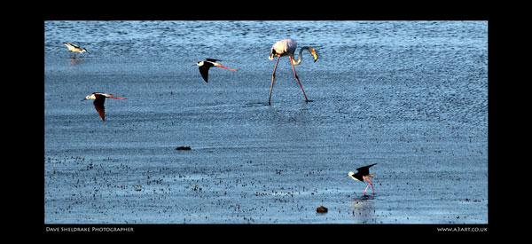 Salgados bird 3