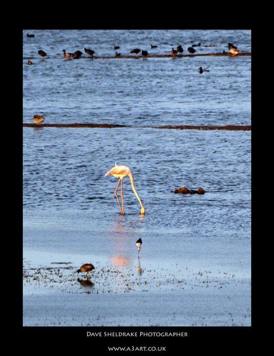 Salgados bird 4