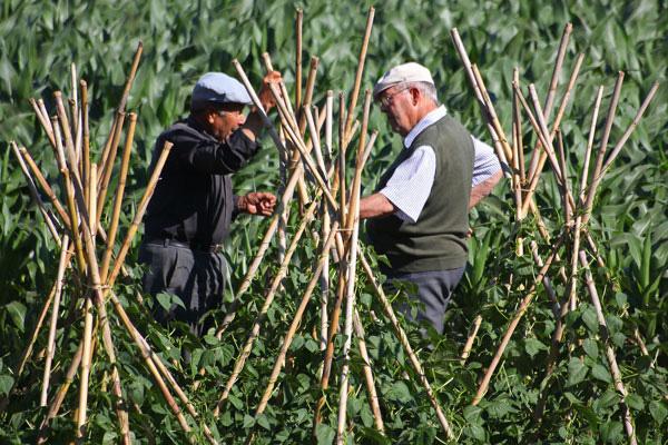 Portuguese farmers