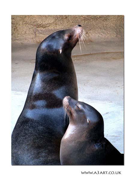 Zoomarine Sea Lions