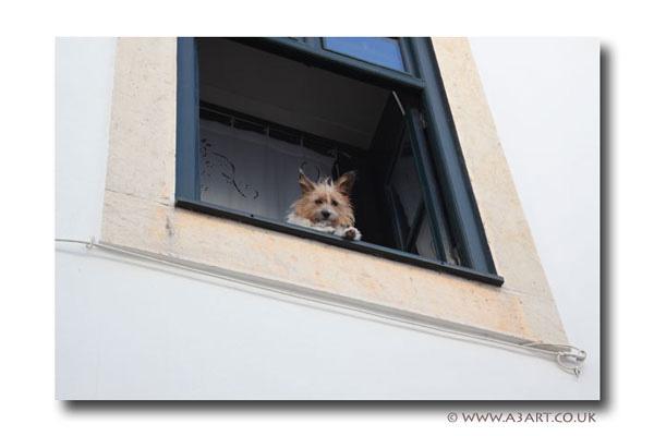 Window ~5