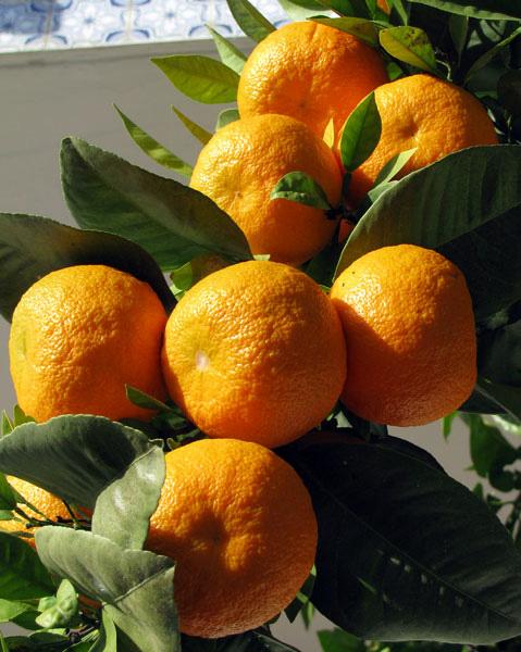 Oranges Algarve Blog #001