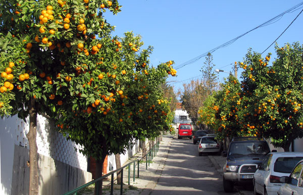 Oranges Algarve Blog #002