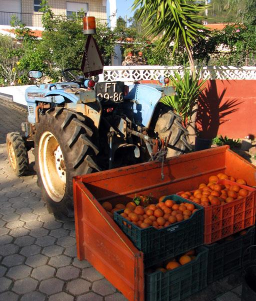 Oranges Algarve Blog #003