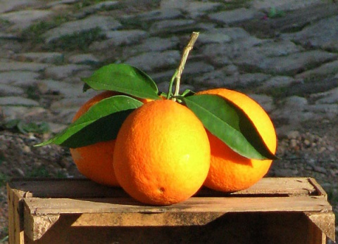 Oranges Algarve Blog  #005
