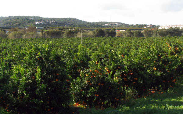 Oranges Algarve Blog #006