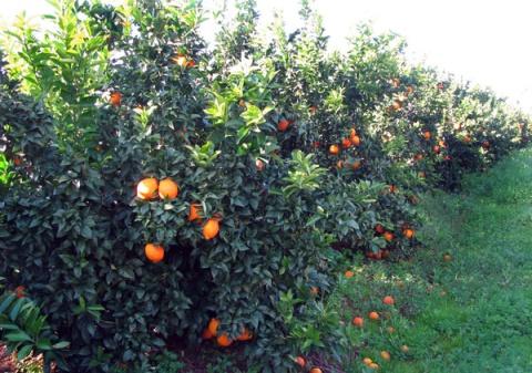 Oranges Algarve Blog #007