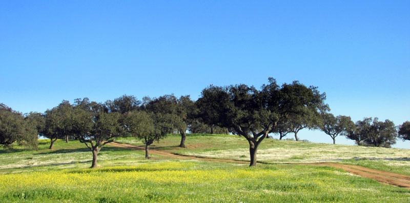Heading into the Alentejo countryside (1/6)