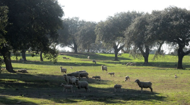 Alyson Sheldrake Algarve Blog Alentejo countryside