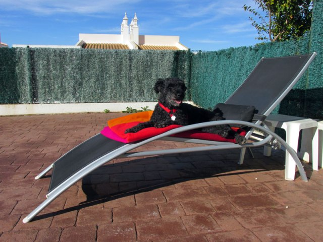 Algarve Blog - Kat the dog