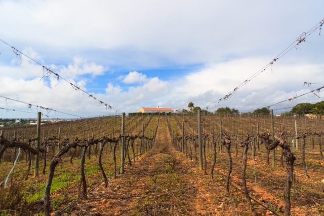 Adega do Cantor - Winery of the Singer Algarve Blog