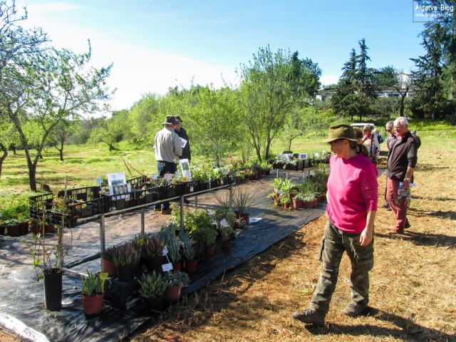 Silves Spring Garden Fair 2017 Algarve Blog