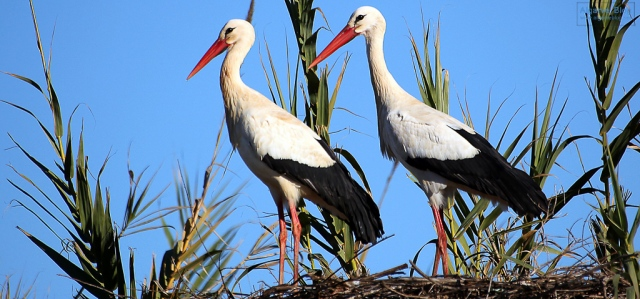 White Storks Algarve Blog