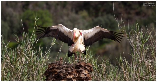 White Storks Algarve Blog