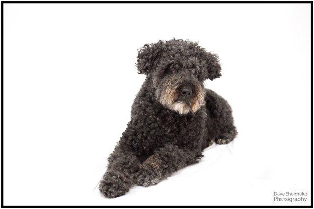 Kat the Dog - Algarve Blog